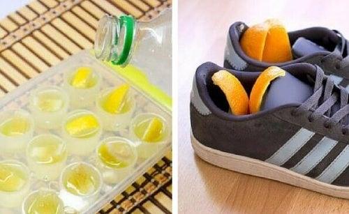 Cytryna i pomarańcza