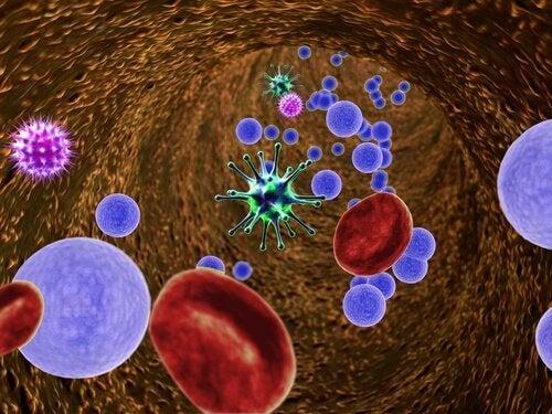 Komórki krwi