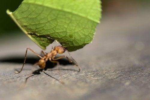 Mrówka i liść