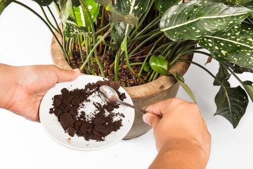 Naturalny nawóz z fusów po kawie