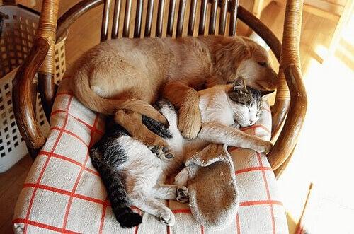 pchły i kleszcze atakujące psy i koty