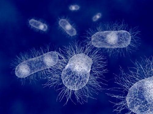 Flora bakteryjna w jelitach
