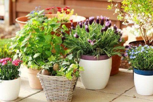 doniczki z kwiatami upiększą ogród na balkonie