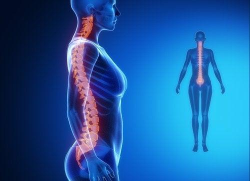 Kręgosłup – jego powiązanie z innymi organami