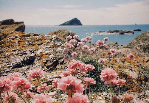 Krajobraz z kwiatami