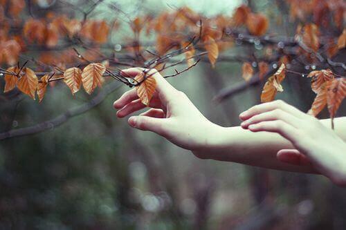 Liście na drzewie