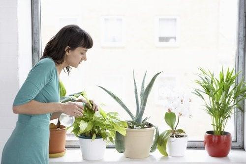 Kobieta nawozi rośliny