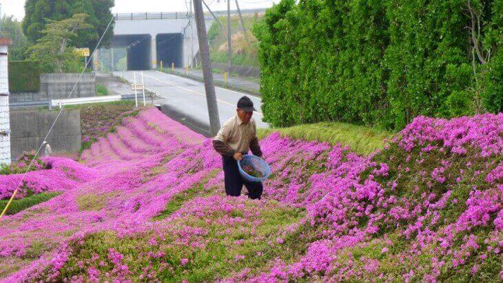 Ogród pełen kwiatów