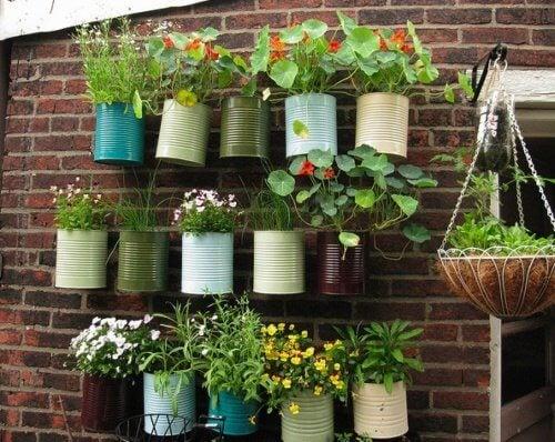rośliny na ścianie urozmaicające ogród na balkonie