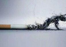 Papieros - palenie skraca życie