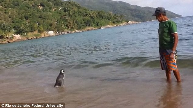 Pingwin i Joao na plaży