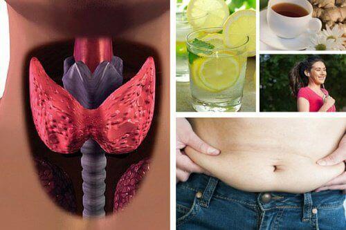 Tarczyca brzuch kobieta herbata napój