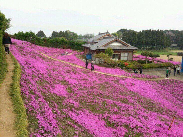 Tysiące kwiatów