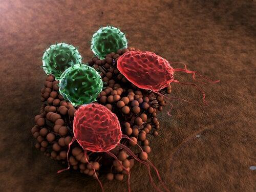 Komórki odporności