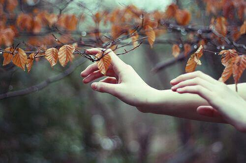 Pośród liści