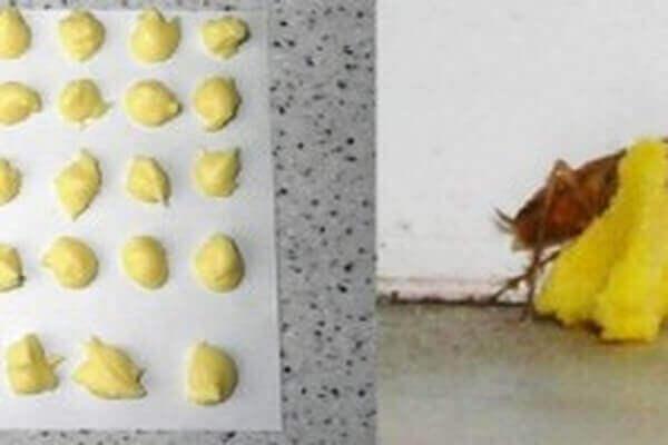 Kwas borowy z jajkiem na karaluchy