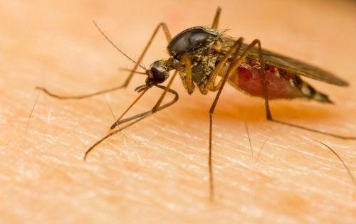 Komary – dlaczego wybierają akurat Ciebie?