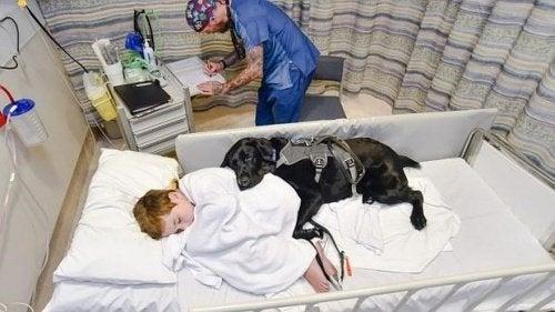 Chłopiec chory na autyzm i jego przyjaciel…