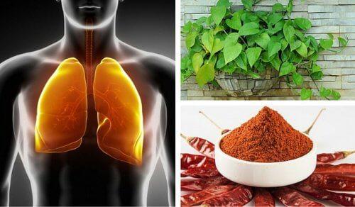 Płuca i oskrzela — jak je oczyścić w naturalny sposób?