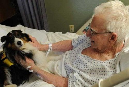 Pies odwiedza pana w szpitalu