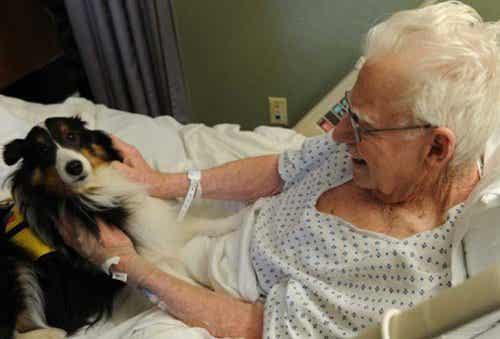 Szpital, w którym chorych odwiedzają ich zwierzęta