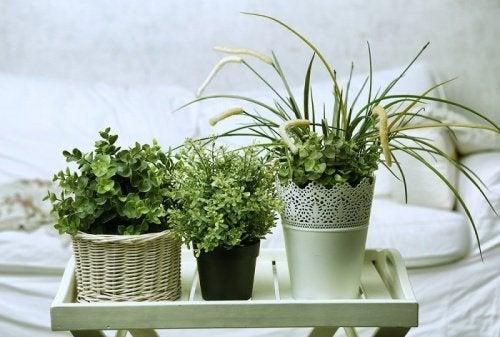 Bezsenność: rośliny idealne do Twojej sypialni