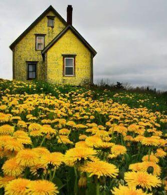 Żółty dom