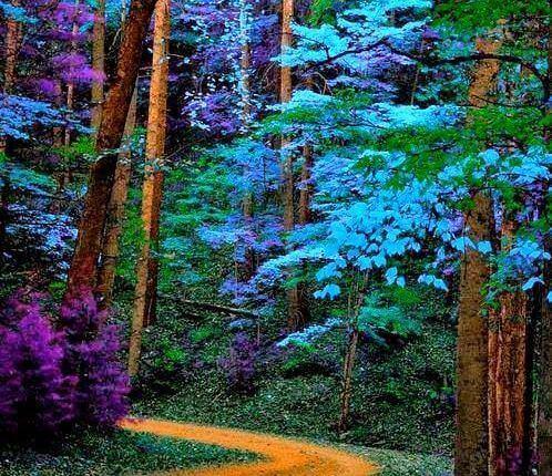 Niebieskie drzewa