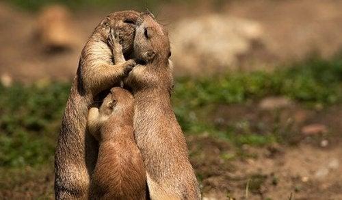 Pocałunek zwierząt