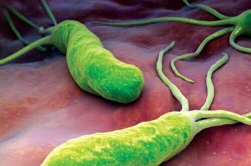 Bakteria wywołująca ból, wzdęcia i biegunkę