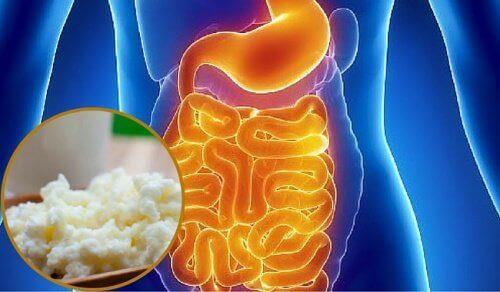 Flora bakteryjna jelit – jak ją przywrócić?