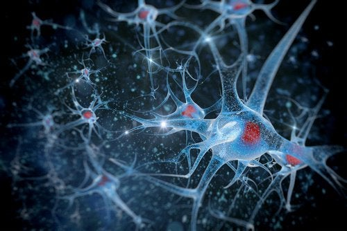 Neurony, komórki mózgu