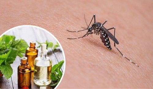 Olejek na komary