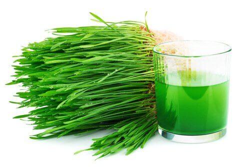 Zielony chlorofil