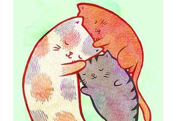 tulące się koty