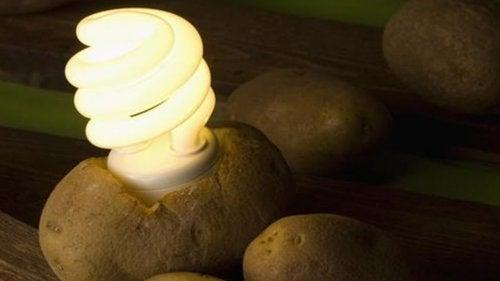 ziemniak-lampka