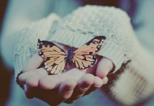 motyl na dłoniach