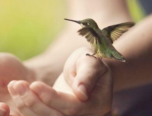 ptak na ręce