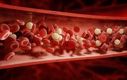 Białe i czerwone krwinki