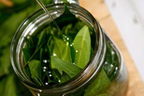 Olej z liści laurowych – jego niesamowite właściwości