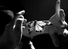 puszczenie motyla do lotu