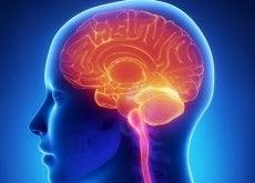 obraz mózgu