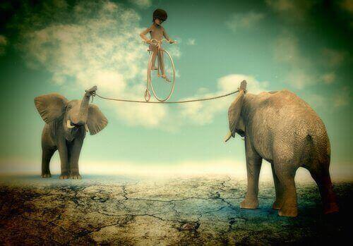 chłopiec chodzi na linie przywiązanej do trąb słoni - samokontrola