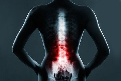 piersiowy odcinek kręgosłupa