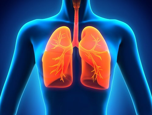 Płuca, a kichanie