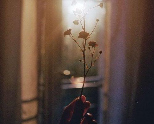 Suszony kwiat pod światło