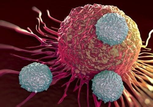 Komórki nowotworowe, a produkty alkalizujące