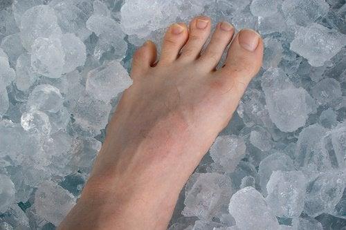 lód na stawy