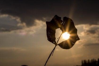 Suchy liść o zachodzie słońca