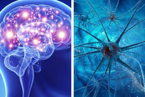 Ludzki umysł